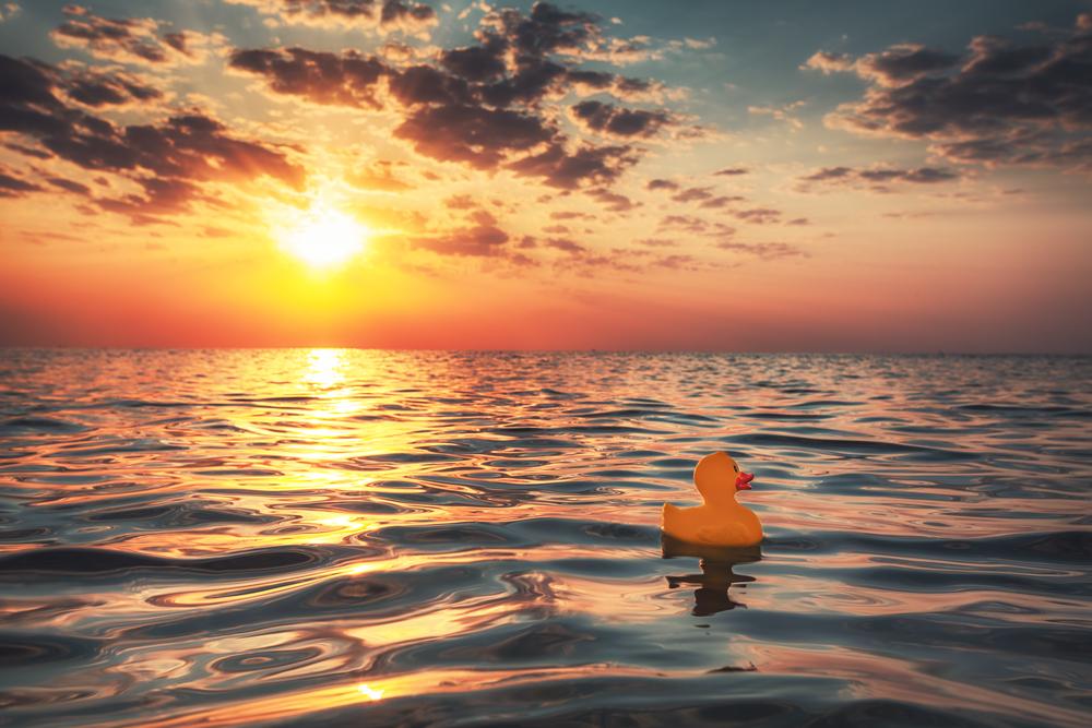 freelance duck sailing into sunset